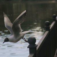 Чайка :: Verdalika Verdalika