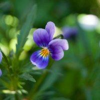 цветы :: Ольга Антонюк