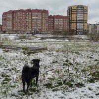 Наше зимнее лето :: Наталья Каравай