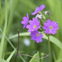 Лесные цветы. :: юрий Амосов