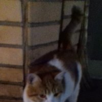 Кошка рыжая. :: Sall Славик/оf
