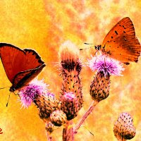 Красные бабочки :: Екатерина Торганская