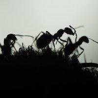 Из жизни насекомых :: Оксана Пучкова