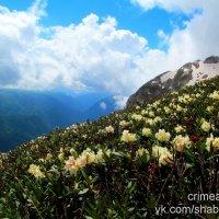 На горе Фишт :: Михаил Шабанов