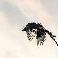 полетели. :: petyxov петухов
