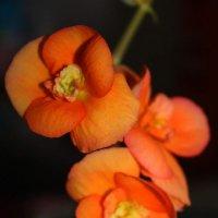 цветочки :: Людмила Алейникова