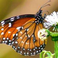 DSC_3210  Из жизни насекомых 1 ............. :: Aleks Minin