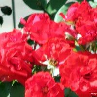 Розы вдоль дороги :: Валерьян Запорожченко