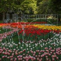 В тюльпанах :: Андрей Нибылица