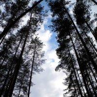 В лесу :: Шура Еремеева