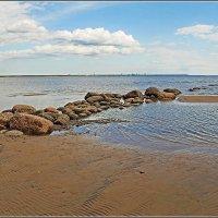 На берегу Финского залива. :: Роланд Дубровский