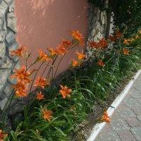 цветы :: Анатолий Збрицкий