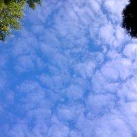 Облака, белогривые лошадки! :: Татьяна Лобанова