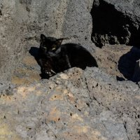 Черный кот :: Константин Шабалин