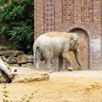 Лейпциг.. зоопарк.. :: Надежда