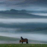 Ходят кони .. :: Влад Соколовский