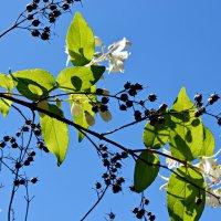 Плоды завяжутся в цветах... :: Валентина Данилова