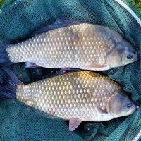 Рыбалка в Царицыно :: Константин Анисимов
