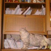 Кот по имени майор :: Людмила Макарова