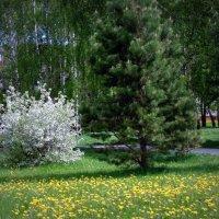 Начало июня . :: Мила Бовкун