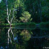 У лесного озера :: Сергей