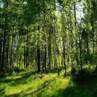 В лесу... :: Нэля Лысенко