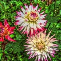 Цветы в чужом саду! :: Антоха Л