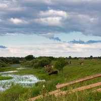Сельский пейзаж :: Александр Синдерёв