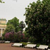 Весна в Питере. :: sav-al-v Савченко