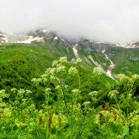 Альпийские луга в Домбае :: Вячеслав Случившийся