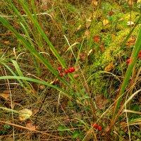 Прогулка по осеннему лесу :: Игорь Сикорский