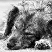 Уличный пёс :: Алексей Румянцев