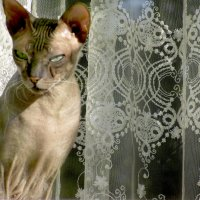 Кошка в окошке :: Лидия Суюрова
