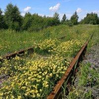 Июнь, желтые цветы, ржавые рельсы :: Николай Белавин