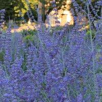 голубые цветы :: tina kulikowa