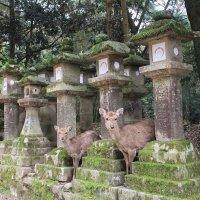 Япония. Нара. Святилище Касуга Тайся... :: Виктория