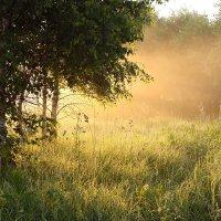 Утренний свет :: Екатерина Липатова