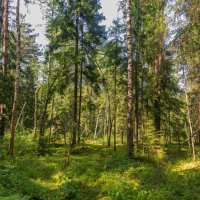 В лесу :: Владимир Брагилевский