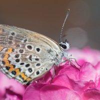 Бабочка :: Дина Горбачева