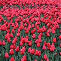 цветы :: Александр ***