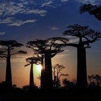 Вечер на Мадагаскаре :: Евгений Печенин