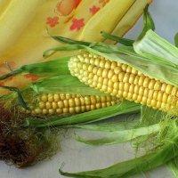 Молодая кукуруза :: Татьяна Смоляниченко