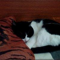 спим почти на подушке :: maxim