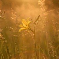 Под лучами вечернего солнца... :: Сергей Герасимов