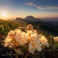 Рододендроны Большого Тхача. :: Алексей Mukusu