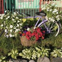 Цветы для любимой прямо из полей. :: Анатолий. Chesnavik.