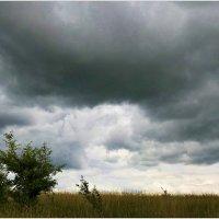 Перед дождём. :: Валерия Комова