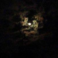 Ночное небо :: Лариса