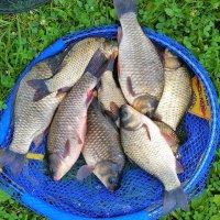 Рыбалка на царицынских прудах :: Константин Анисимов