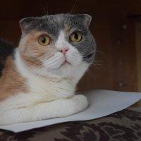 Кошечка на бумаге. :: Sall Славик/оf